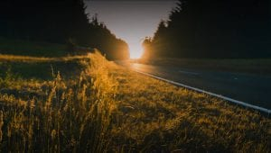 Road and sunset in the forest