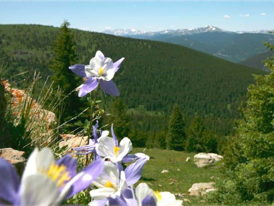 Wild flowers at Nova Guides