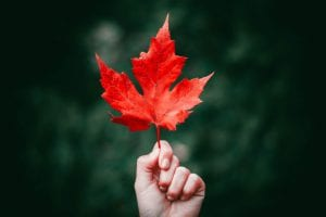 hand holding a red leaf