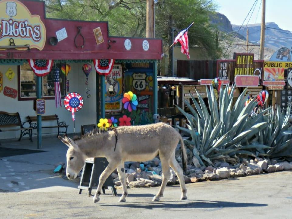 Donkey on Route 66