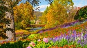 meadow full of flowers of the Appalachian Mountains
